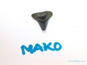 mako shark fossil tooth