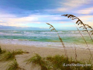 sanibel beach sea oats shelling