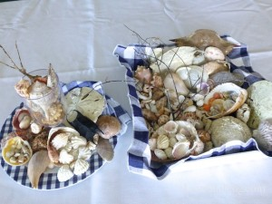 seashells display shellabaloo 2 sharpen tom