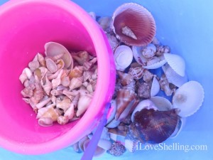seashells inside shell buckets