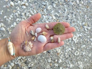 small seashells sanibel