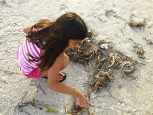 ava collecting sand dollars