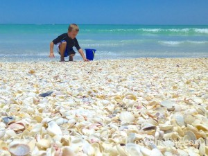 boy with seashells noah