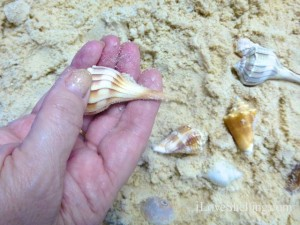 feeling lightning whelk seashell
