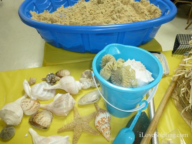 Good Feeling About Seashells