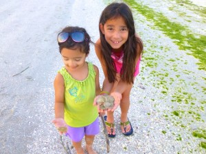 kids with sand dollars sanibel
