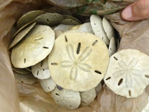 sand dollar bag Fort Myers Beach