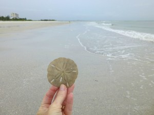 sand dollar beach combing myers florida