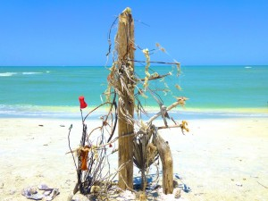 sanibel beach bling art