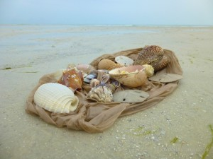 seashell collection myers beach florida