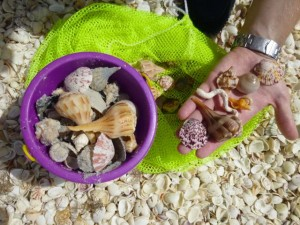 seashells sanibel purple bucket