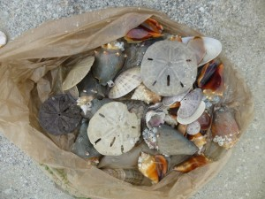 shell bag seashells fort myers beach florida