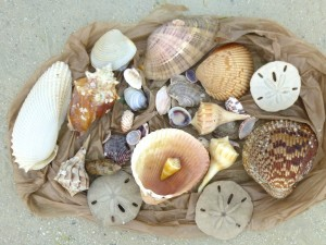 shell collection diane myers beach florida