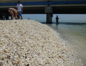 shell mound sanibel bridge