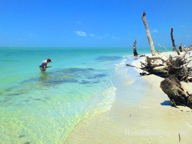 Captiva Island Shelling Tours