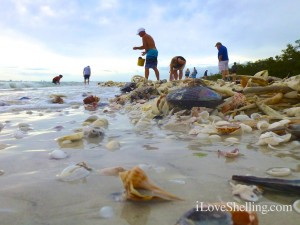 tropical storm andrea brings seashells sanibel