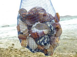 caribbean seashells cuba gtmo