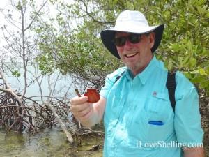 clark shells mangrove roots guantanamo cuba