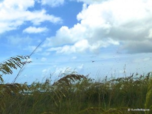 dragonflies sea oats sky