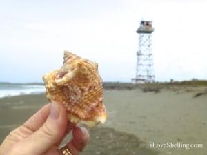 hawk wing shell gtmo guantanamo cuba shelling