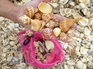 sanibel seashells pink shell bag