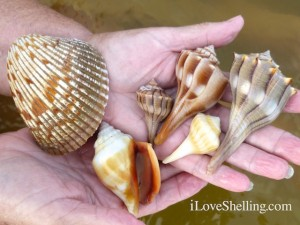 sea shells lighthouse beach sanibel florida
