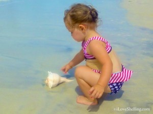 seashell independence day baby sanibel july 4 2013