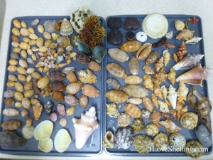 shell collection guantanamo bay cuba