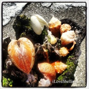 seashells instagram