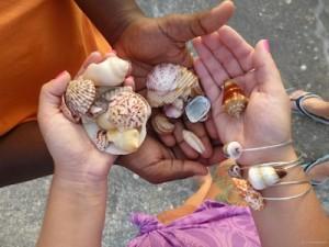 alexis nj todd ny seashells