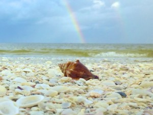 conch double rainbow sanibel island florida