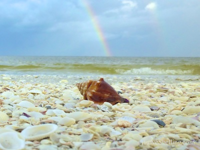 Double Rainbow Over Sanibel Conch Shell