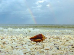 conch shell under rainbow on sanibel