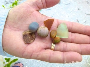 donnie sea beans and seaglass shellabaloo 3 cayo costa