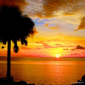 florida island sunset palm tree