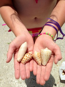 ft myers beach shells