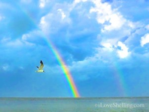 gull and Sanibel rainbow