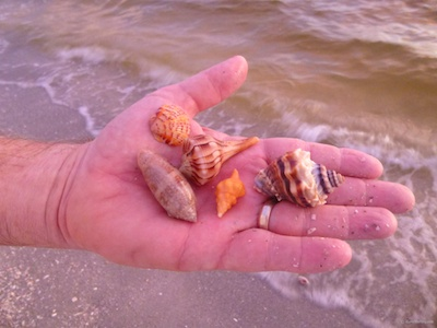 Summer Shelling At Blind Pass