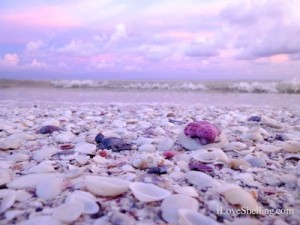 purple sky sanibel sunset scallop