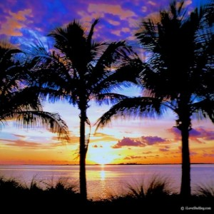 sanibel palm tree sunset