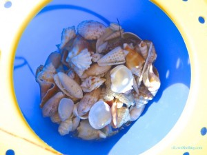 seashells inside blue shell bucket captiva