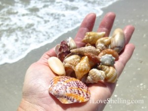 seashells sanibel island inn