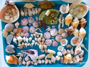 Cathy seashells beach bling shellabaloo 3 sanibel