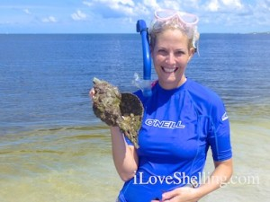 Christine horse conch cayo costa