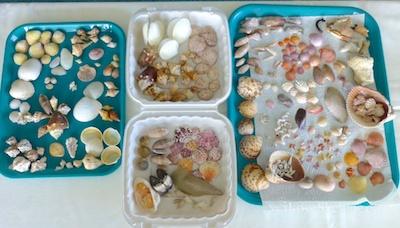 Seashells and Beach Bling at Shellabaloo 3 Shell 'N Tell
