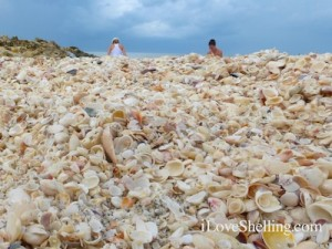 best shells on sanibel captiva Sept 2013