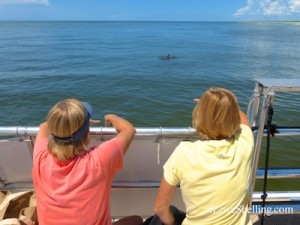 dolphin watching shelling cruise
