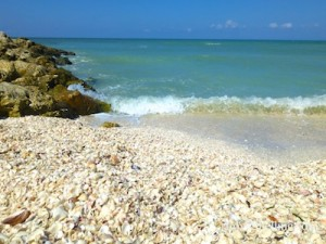 finding lots of shells to collect in south west florida