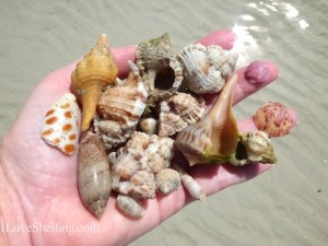 my shelling adventure today