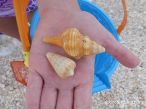orange shells cone conch beach bucket
